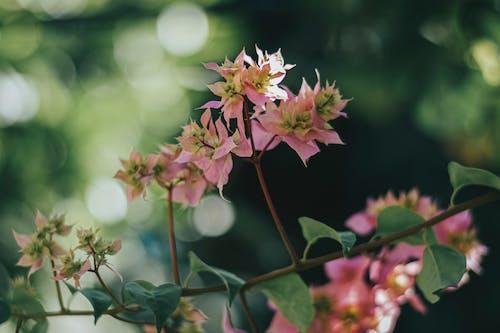 Gratis lagerfoto af 4k-baggrund, blade, blomsterblad, close-up