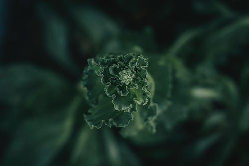 Gratis lagerfoto af 4k-baggrund, blad, blade, blomst
