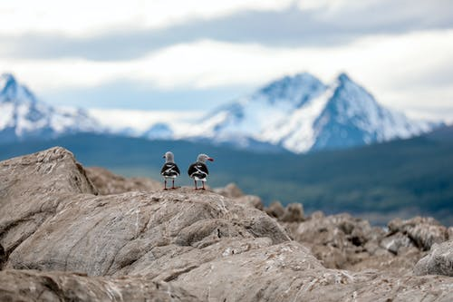 Shallow Focus Photo of Two Birds on Rocks
