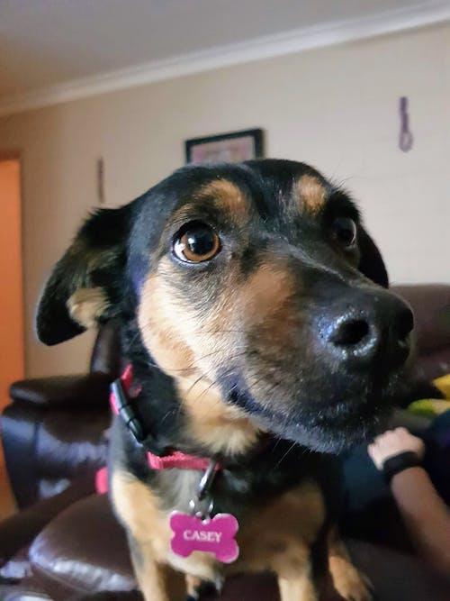 evcil hayvan portresi, köpek, köpekler içeren Ücretsiz stok fotoğraf
