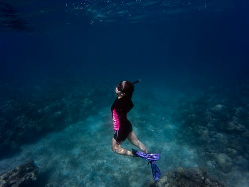 Woman in Black and Pink Swimsuit Underwater