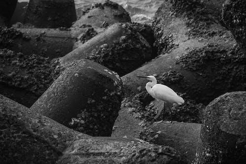 White Bird on Rock Near Water