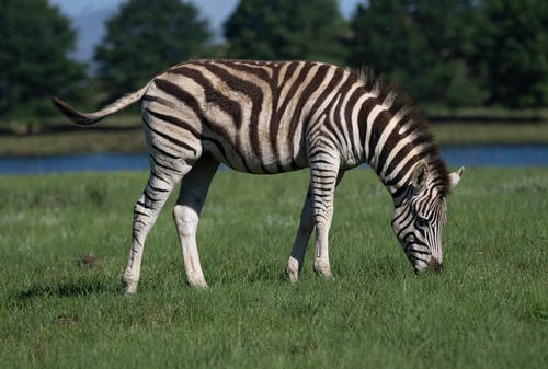 Gratis arkivbilde med dyr, dyreliv, dyreverdenfotografier