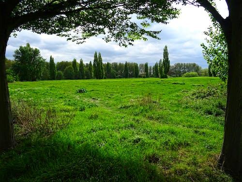 Fotobanka sbezplatnými fotkami na tému denné svetlo, hracie pole, krajina, lesy