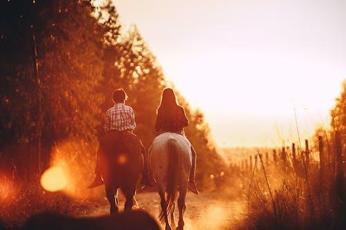 Children riding stallions in countryside at bright sundown