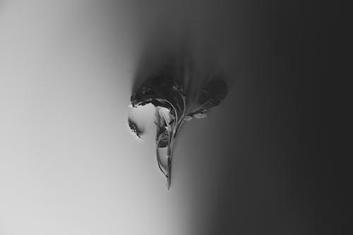 H2O, アート, コントラスト, スタジオの無料の写真素材