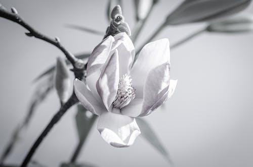 Free stock photo of blossom, flower