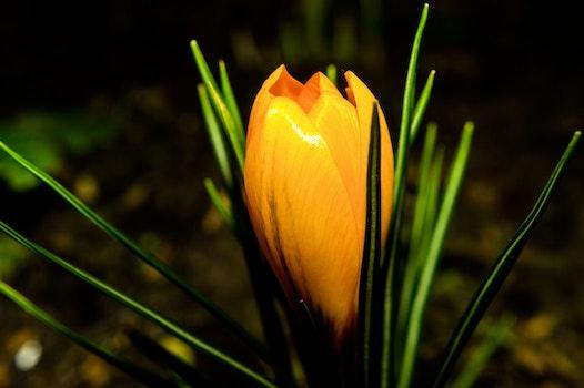 Closeup Photo of Brown Petaled Flower