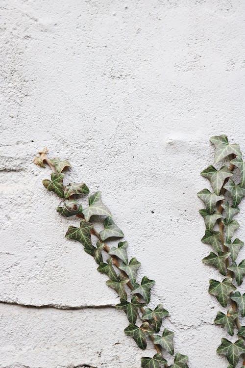 Photos gratuites de abstrait, béton, ciment, espace extérieur