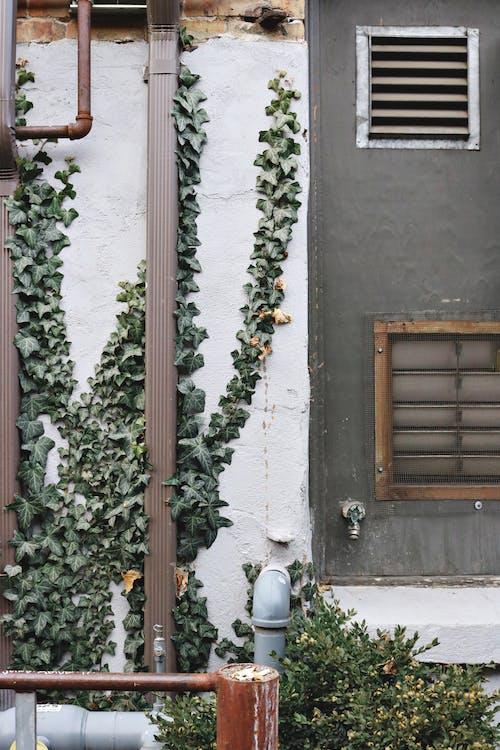 Photos gratuites de allée, architecture, bâtiment, bois