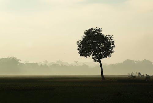 緑の芝生のフィールドに緑の木