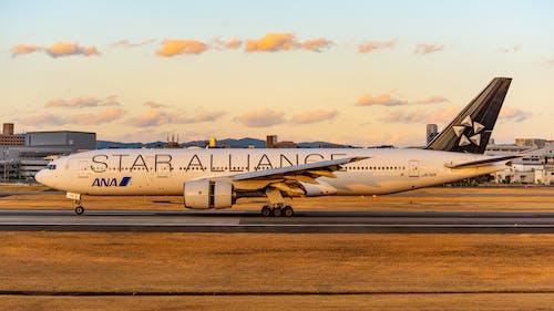 Fotos de stock gratuitas de alianza estrella, ana, aterrizaje de avión
