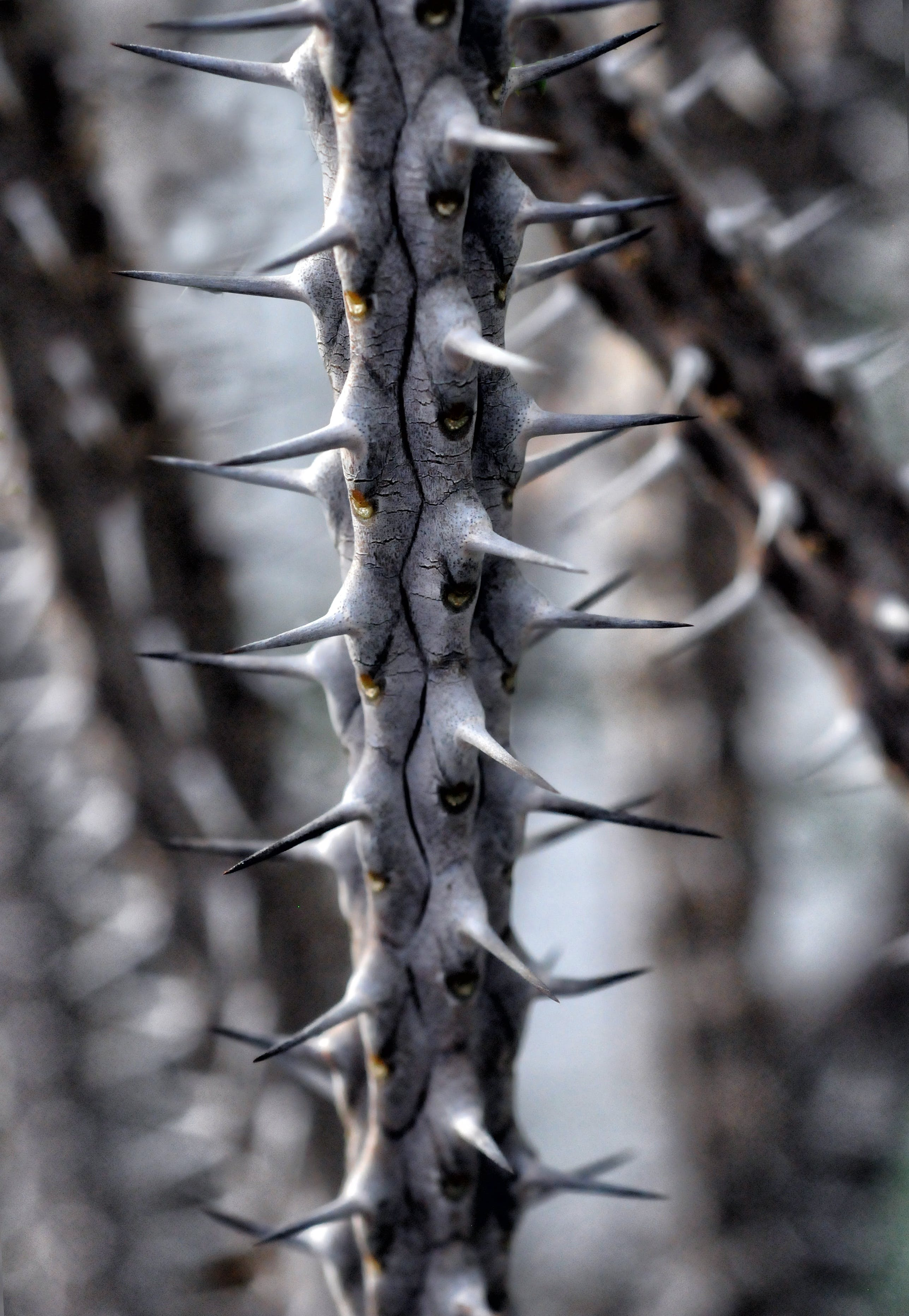Selective Focus Photo of Gray Stem With Thorns