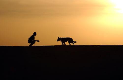 Fotobanka sbezplatnými fotkami na tému exteriér, horizont, nemecký ovčiak, obzor