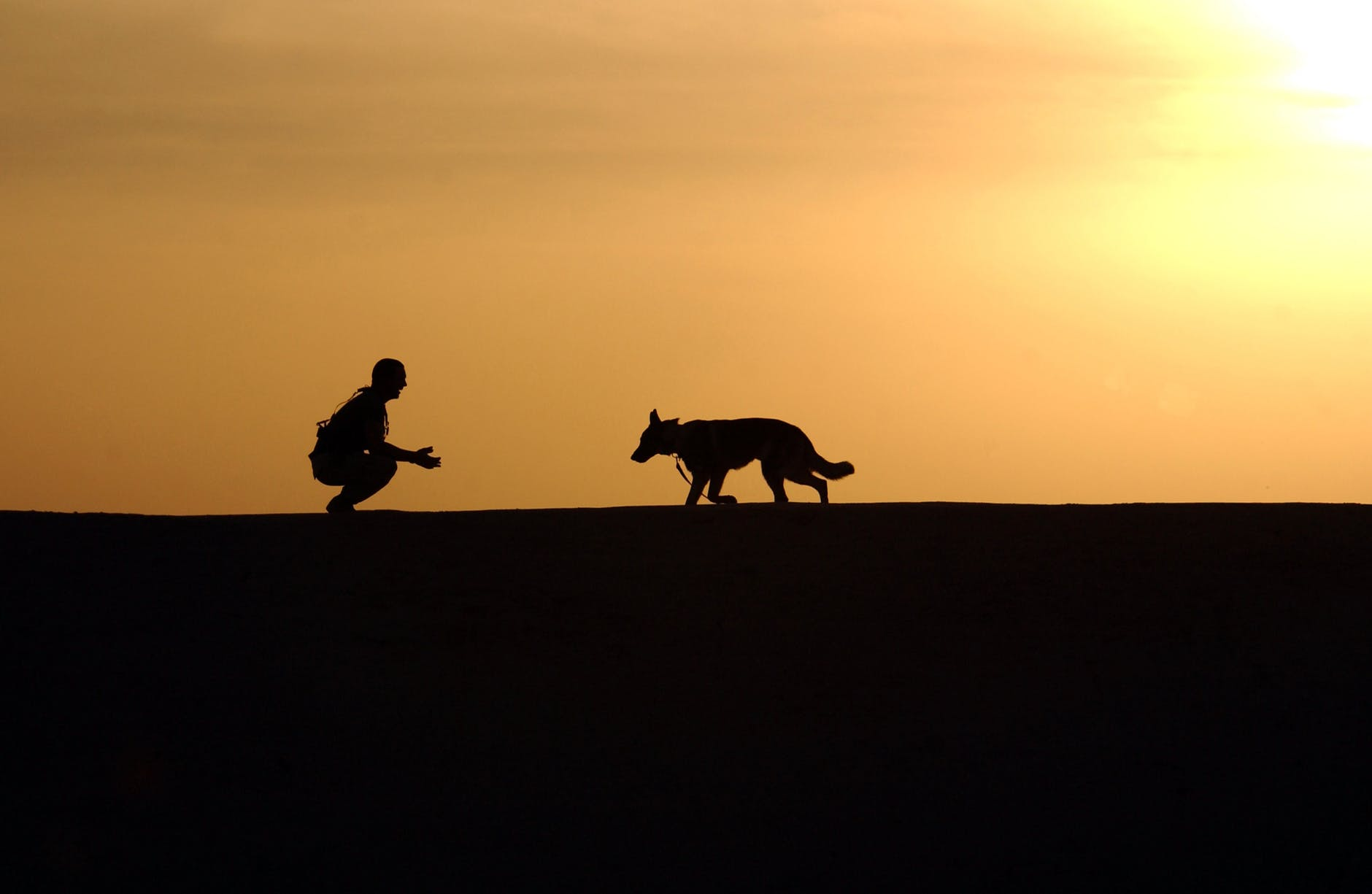 silhouette of a man calling his guard dog