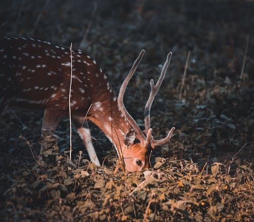 Brown Deer