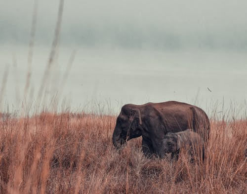 Brown Elephant with Baby Elephant on Brown Grass Field