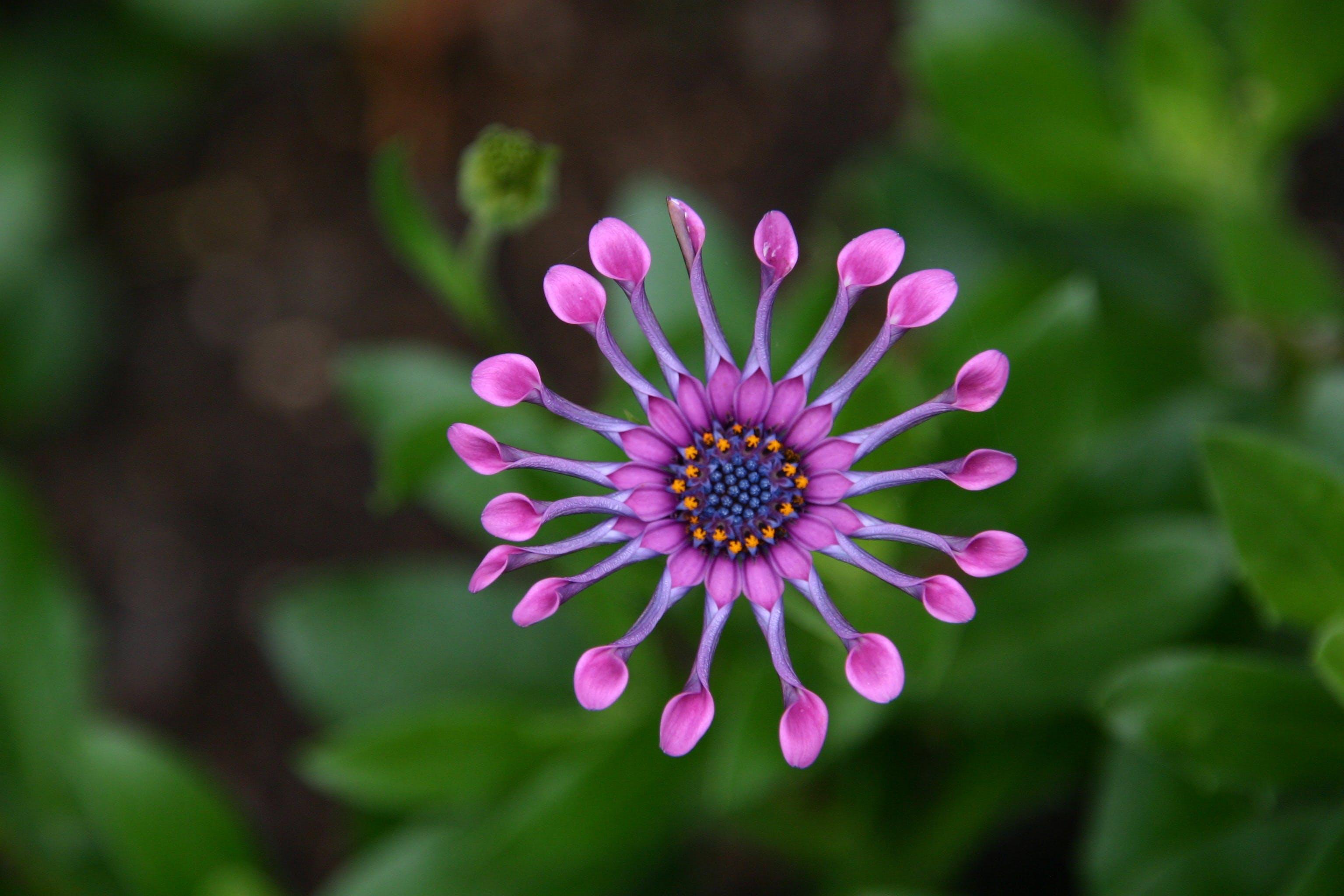 Closeup Photography of Pink Petal Flower