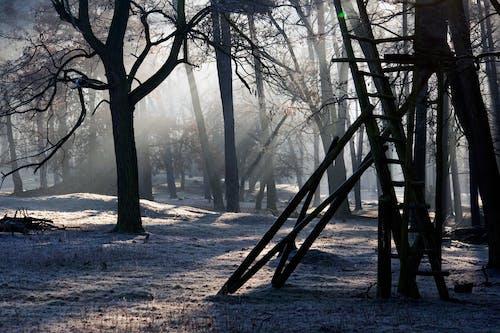 ダーク, 光, 木, 森の中の無料の写真素材