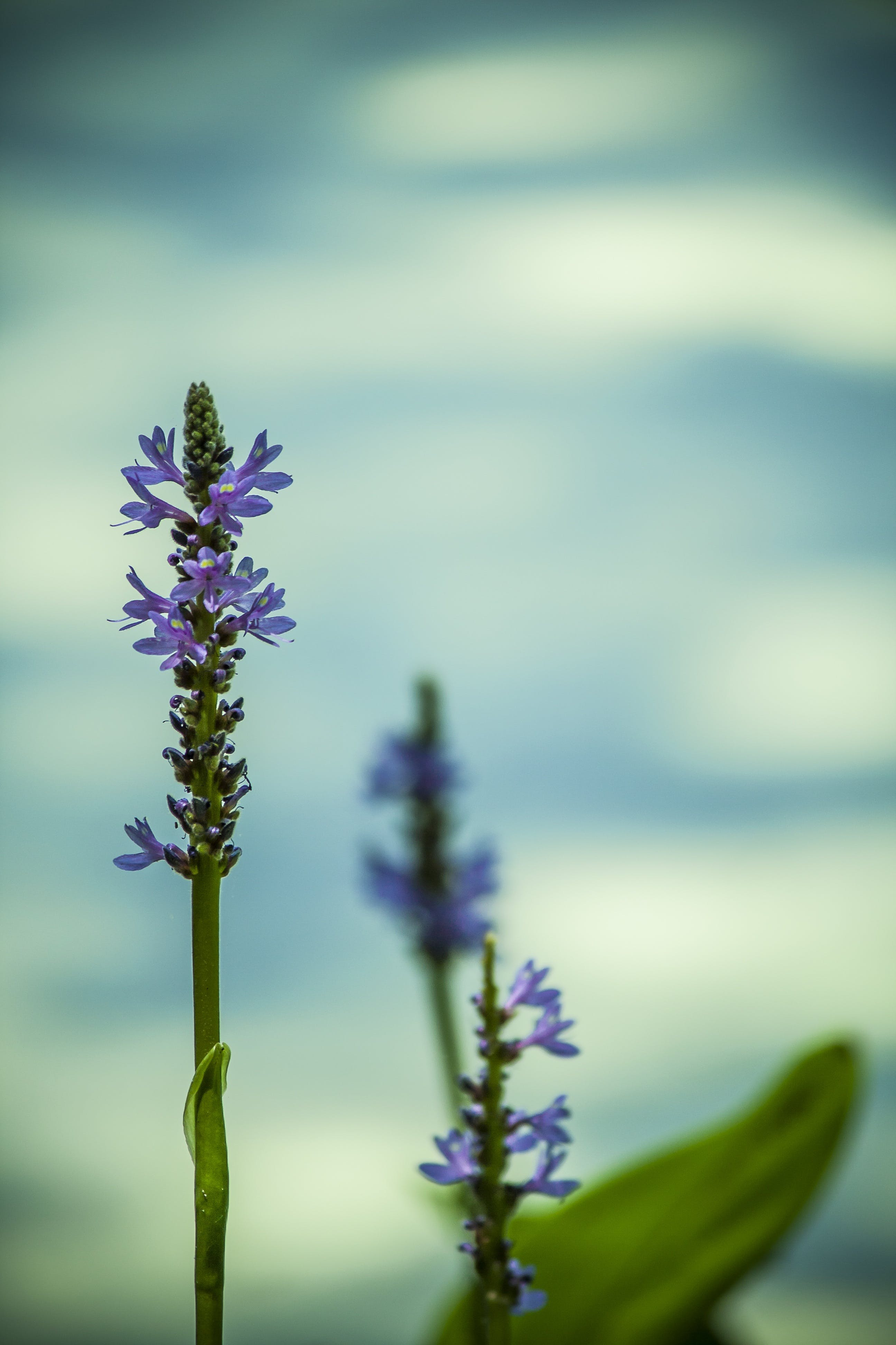 Purple Flowering Plant in Close Up