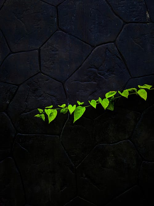 Delicate green twig with leaves against black stone wall