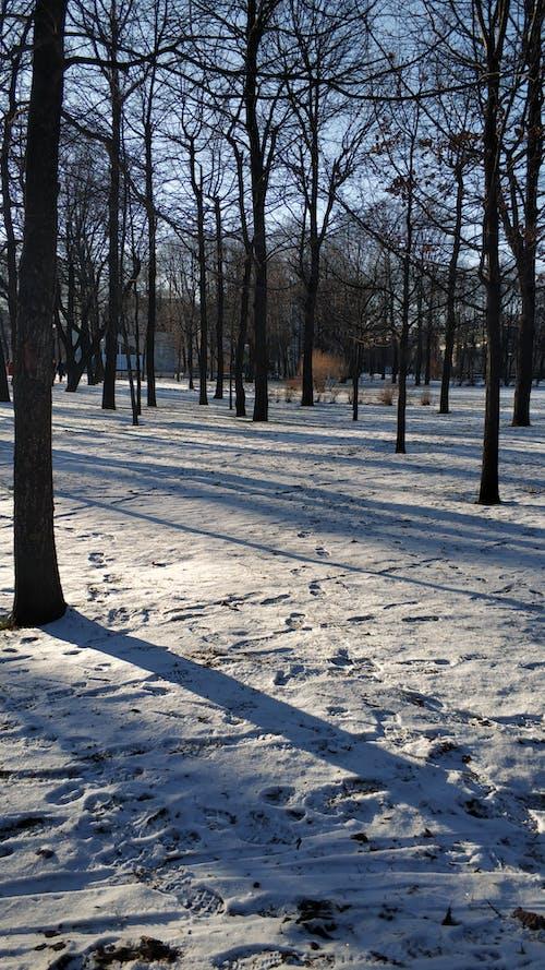 Gratis stockfoto met bomen, februari, sneeuw, winter