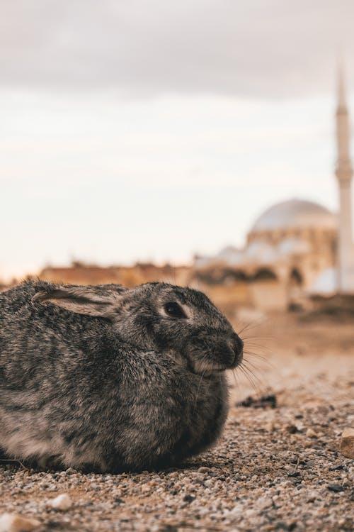 Foto stok gratis binatang, cute, fauna, hewan
