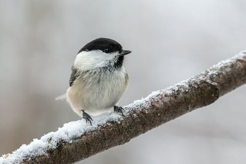 Ảnh lưu trữ miễn phí về cận cảnh, chi nhánh, chim, con vật