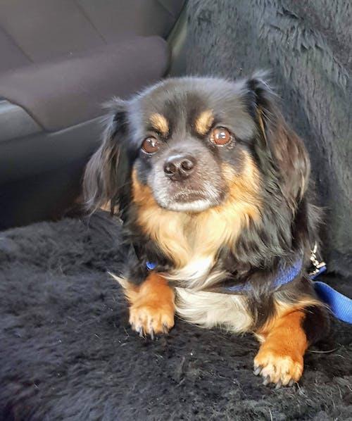 köpek, köpekler içeren Ücretsiz stok fotoğraf