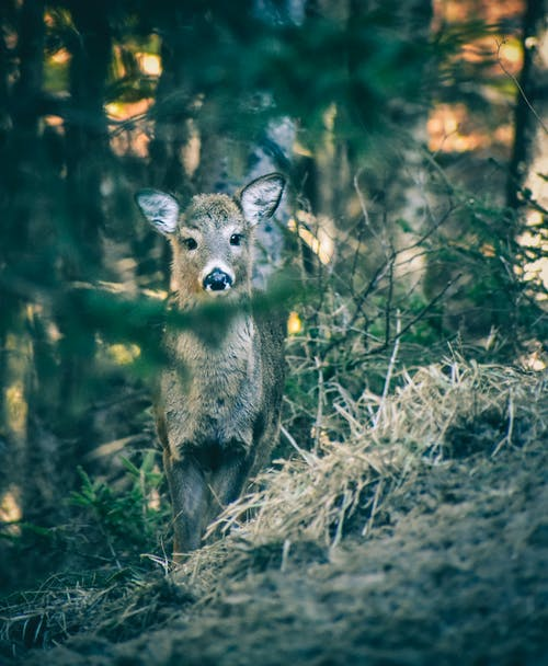 Cute fawn in summer forest in daytime