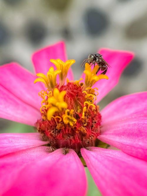 Imagine de stoc gratuită din albină, floare, floră, fotografie de aproape