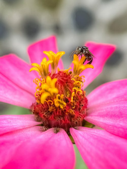 Fotos de stock gratuitas de abeja, flor, flora, insecto