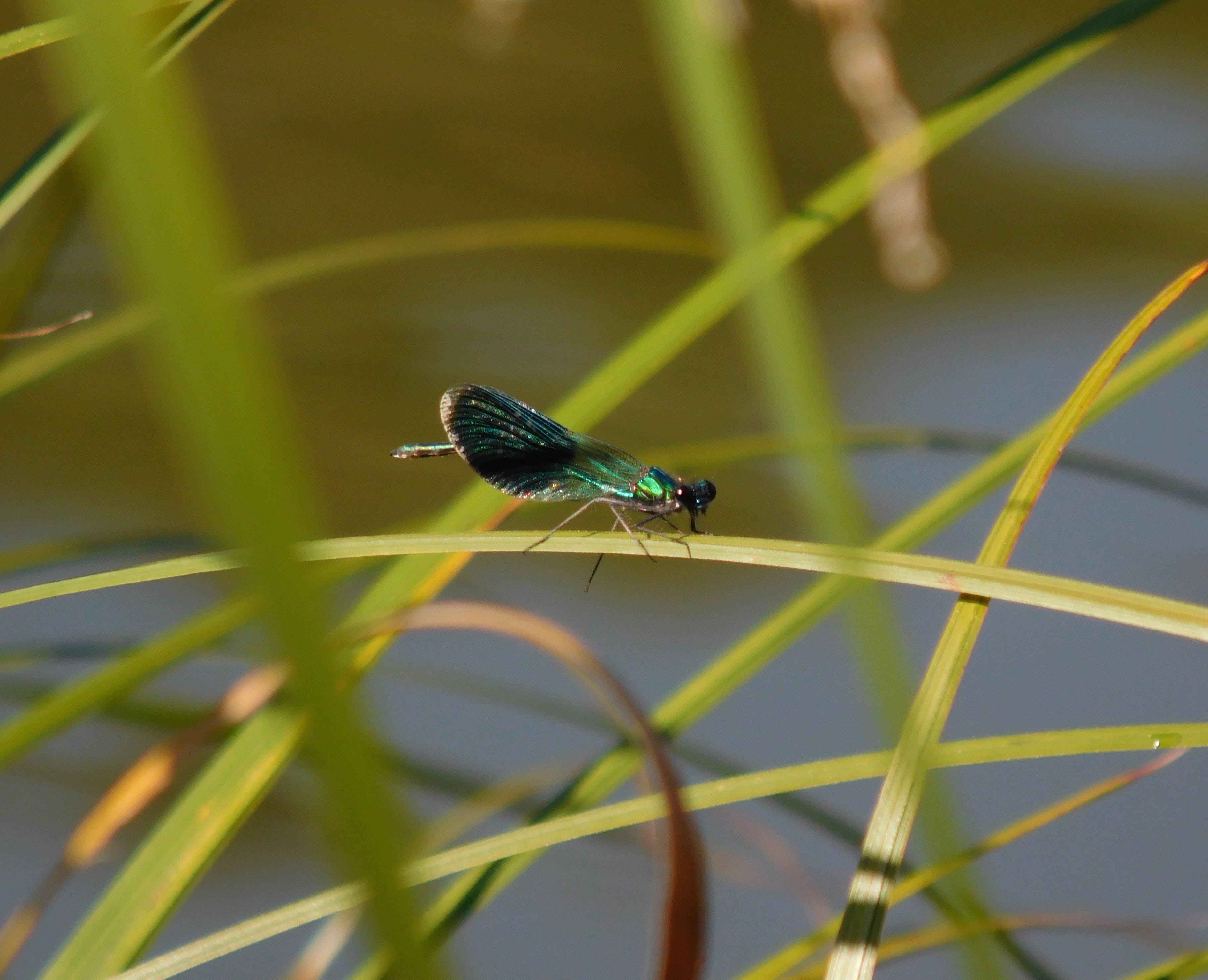Free stock photo of blue, bug, green, lake