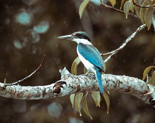 Blauer Und Brauner Vogel Auf Braunem Ast