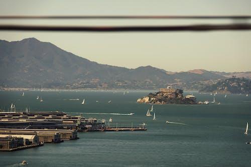 Free stock photo of alcatras, america, bay bridge