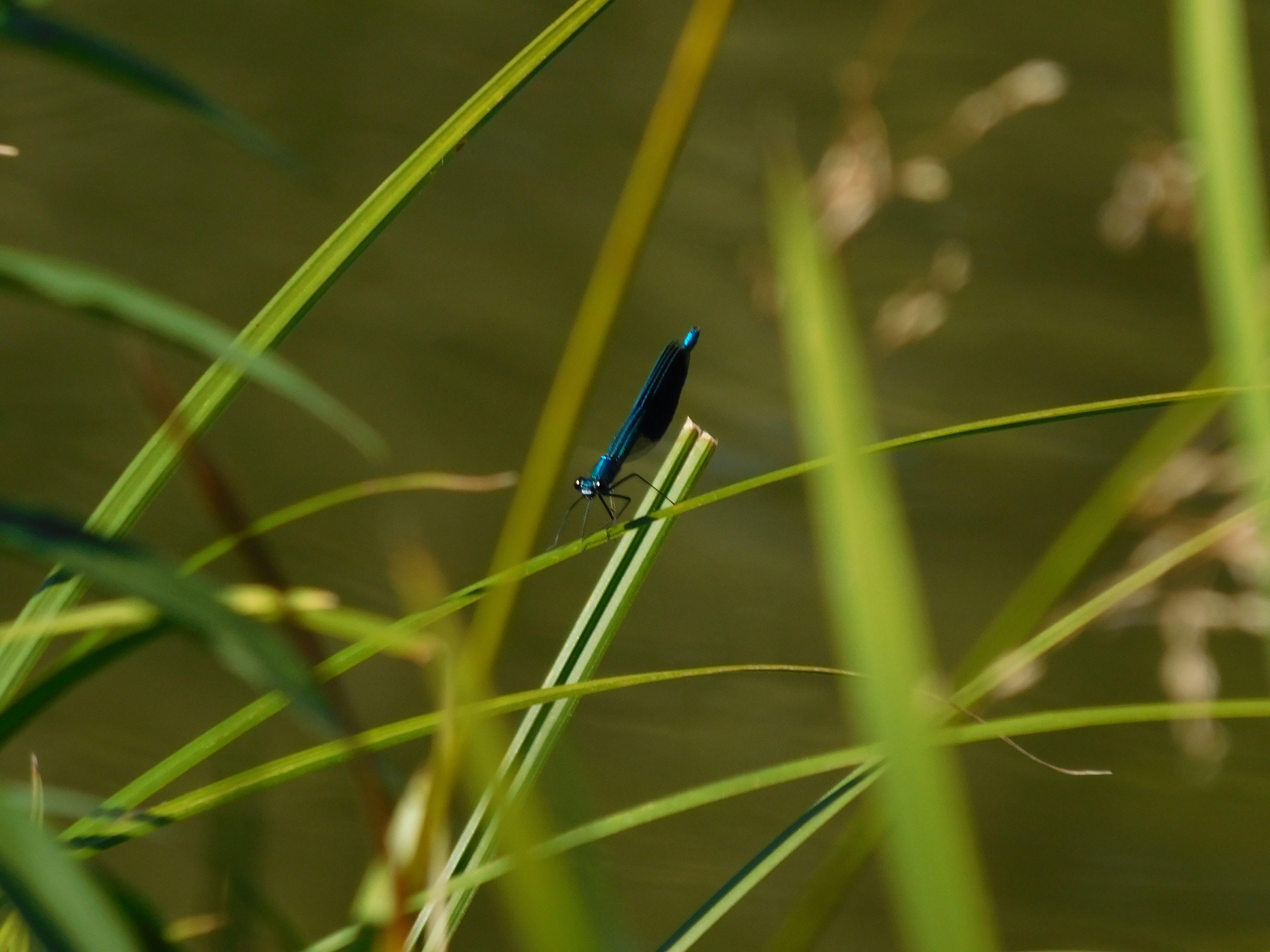 Free stock photo of bug, green, macro, macro life