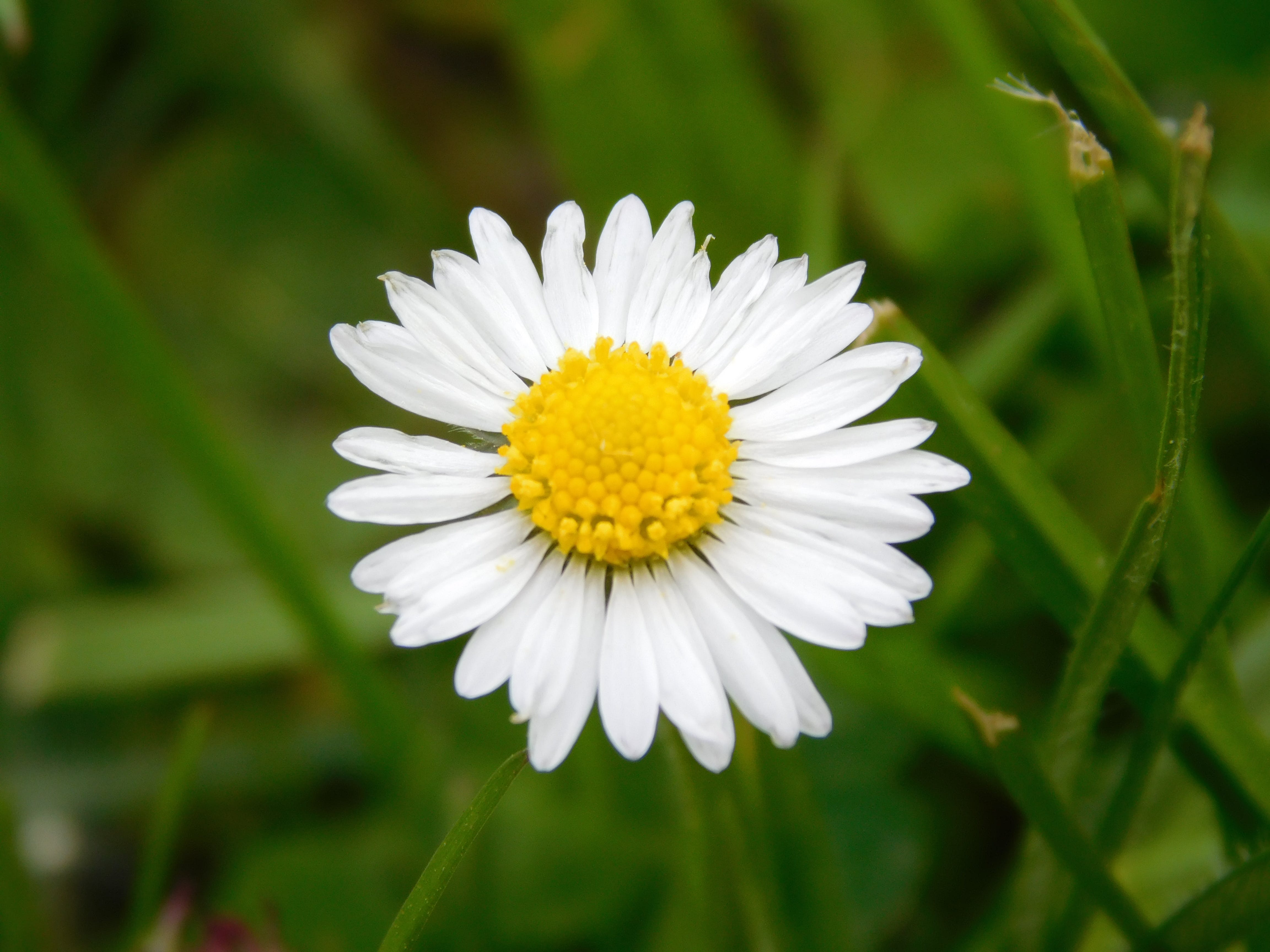 Free stock photo of flower, green, summer, white