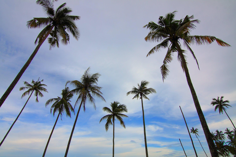 beach, clouds, coconut