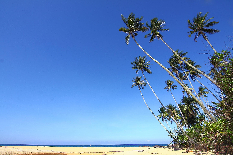 beach, blue sky, coconut trees