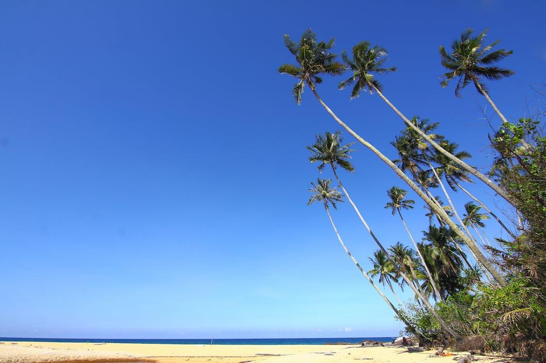 afslapning, blå himmel, ferie