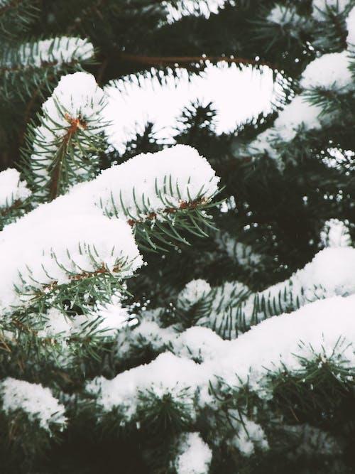 Free stock photo of art photo, beautiful, cold, creative photography
