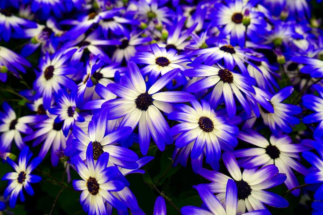 blanc, botanique, brillant