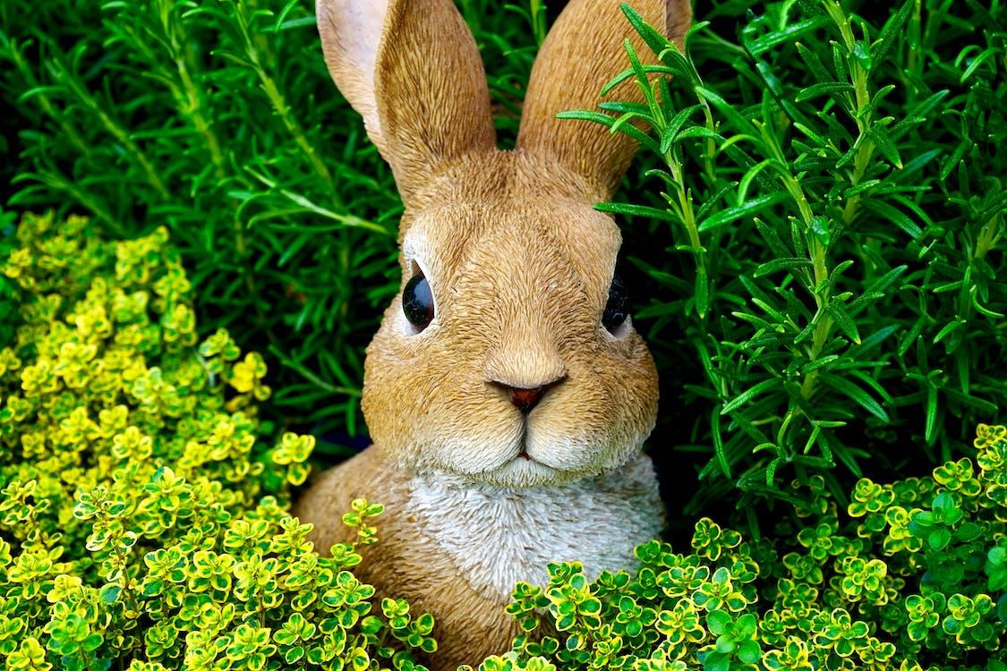 乾草地, 乾草田, 兔子