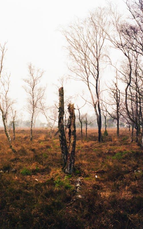 Foto d'estoc gratuïta de analògic, arbre, arbre caigut, estepa
