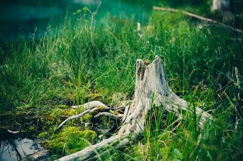Foto d'estoc gratuïta de aigua, aiguamoll, arbre, bosc