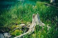 wood, light, landscape