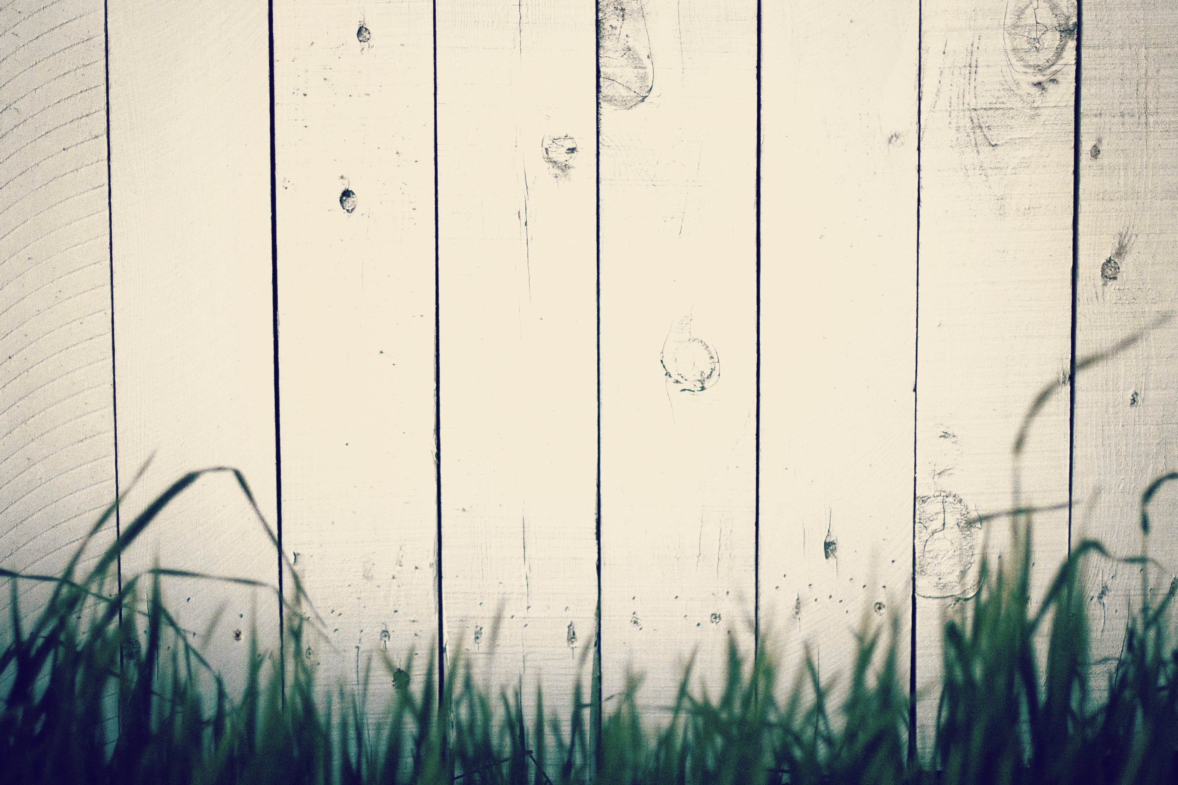 Free stock photo of wood, grass, fence, background