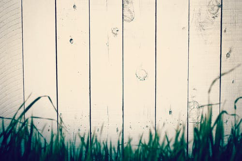 Безкоштовне стокове фото на тему «Деревина, паркан, трава, фон»