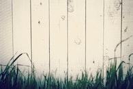 wood, grass, fence