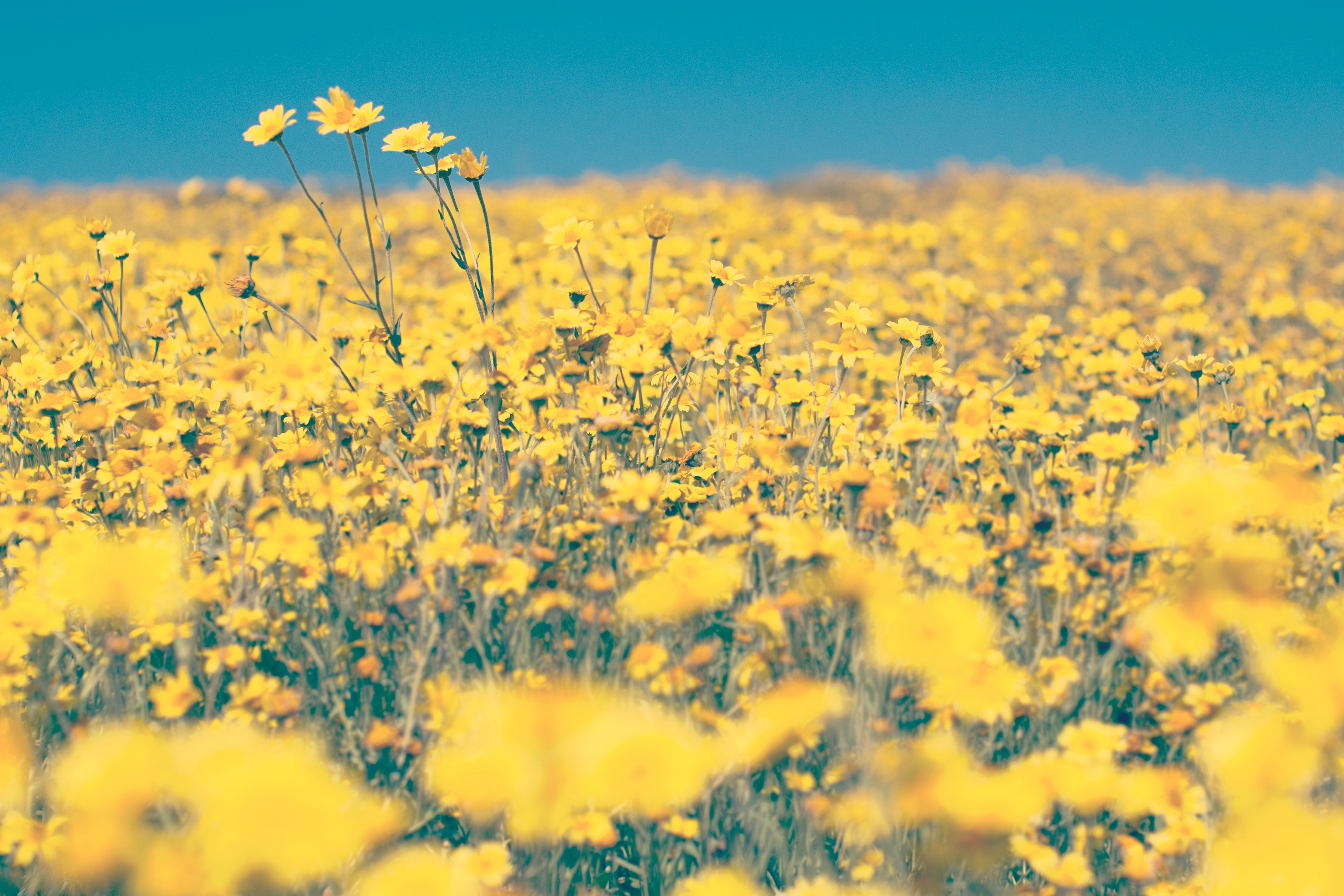 1000 Interesting Wild Flowers Photos Pexels Free Stock Photos